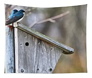 Tree Swallows On Birdhouse Tapestry