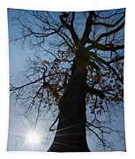 Tree With Sun Tapestry