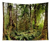 Trees At Olympic National Forest Tapestry