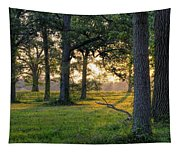 Trees At Sunrise Tapestry
