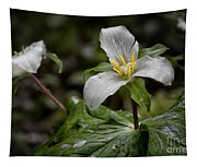 Trillium - After The Rain Tapestry