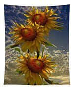 Trio Of Sunflowers Tapestry