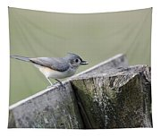 Tufted Titmouse With Seed Tapestry