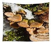 Turkey Tail Bracket Fungi Tapestry