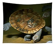 Turtles Float Tapestry