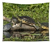 Turtles Sunning Tapestry