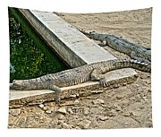 Two Gharial Crocodiles In Gharial Conservation Breeding Center In Chitwan Np-nepal   Tapestry