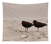 Two Oystercatchers Haematopus Unicolor On Beach Tapestry