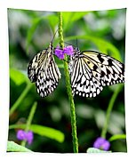 Two Paper Kite Or Rice Paper Or Large Tree Nymph Butterfly Also Known As Idea Leuconoe Tapestry