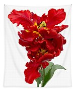 Two Red Parrot Tulips Tapestry