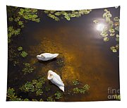 Two Swans With Sun Reflection On Shallow Water Tapestry