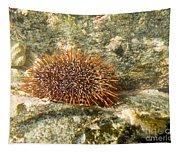 Underwater Shot Of Sea Urchin On Submerged Rocks Tapestry