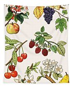 Unidentified Montage Of Fruit Tapestry