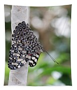 Variable Cracker Butterfly Tapestry