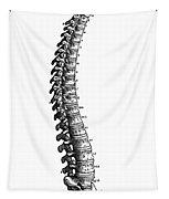 Vesalius: Spine, 1543 Tapestry