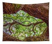 View Through Angel Oak Tree Tapestry