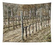 Vineyard In Early Spring Tapestry