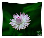 Violet And White Flower Sepals And Bud Tapestry