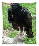 Vulture-09520 Tapestry