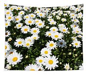 Wall To Wall Daisies Tapestry