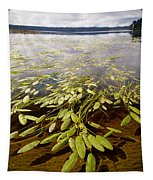 Water Plant Tapestry