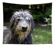 Wet Dog Tapestry