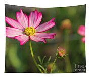 White And Magenta Cosmos Tapestry