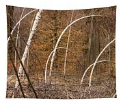White Birch Trees In The Brown And Orange Forest Tapestry