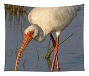 White Ibis In Grass Tapestry