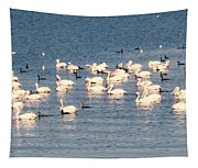 White Pelicans Tapestry