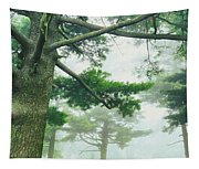 White Pine Trees, Wisconsin, Usa Tapestry