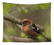 White-winged Crossbill Tapestry