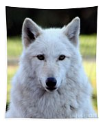 White Wolf Close Up Tapestry