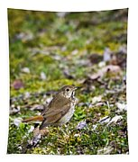 Wild Birds Hermit Thrush Tapestry