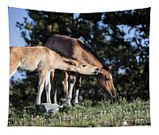Wild Colt-animals-image-2 Tapestry