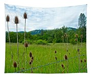 Wild Teasel In Nez Perce National Historical Park-id- Tapestry