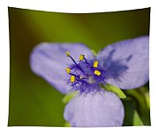 Wildflower 1 - Botanical Photography By Sharon Cummings Tapestry