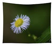 Willow Aster Tapestry