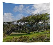 Wind-bent Tree In Tierra Del Fuego Patagonia  Tapestry