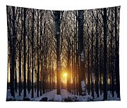 Winter Sunset Through The Trees Tapestry