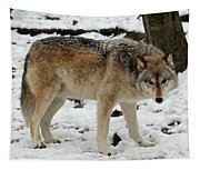 Winter Wolf In The Snow Tapestry