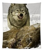 Wolf Protecting Kill Tapestry