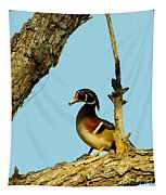 Wood Duck Drake In Tree Tapestry
