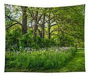 Woodland Phlox   Tapestry