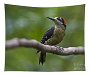 Woody Woodpecker.. Tapestry
