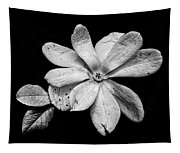 Wounded White Magnolia Wide Version Black And White Tapestry