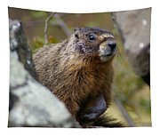 Yellow-bellied Marmot Tapestry