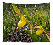 Yellow Lady Slippers Along Emerald Lake Trail In Yoho Np-bc Tapestry