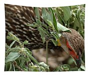 Yellow-necked Spurfowl Tapestry