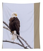 Yellowstone Bald Eagle Tapestry